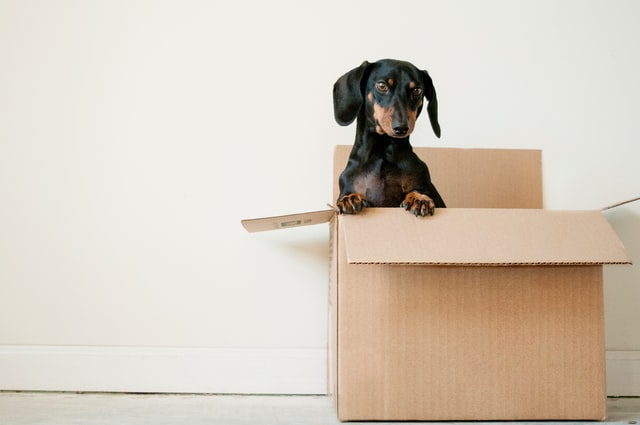 Ask about the pet policy when you're apartment hunting with your furry friend.