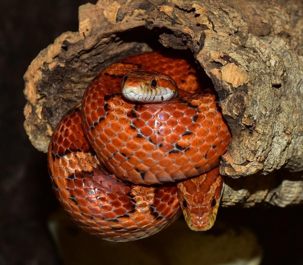 Image result for snake bun