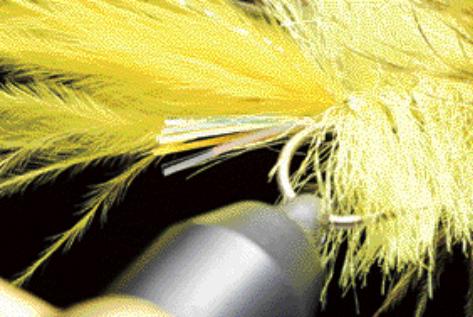 ⑤ 水性昆虫が少ない時期 & 鮭鱒にも使える【ウーリーバガー】