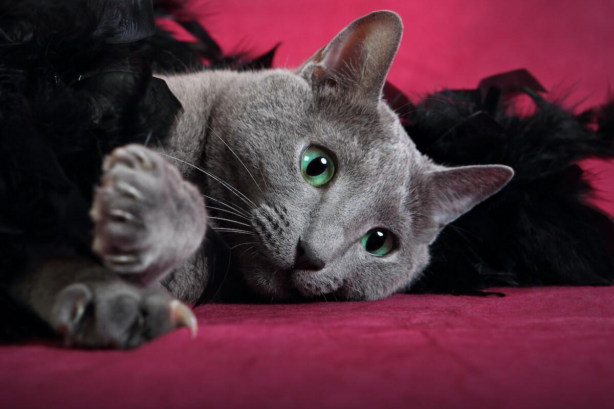 l'arrivée d'un bébé peut être source de stress pour les chats