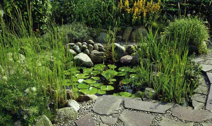 Романтический пруд в саду