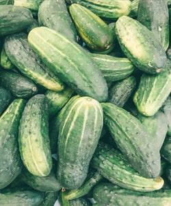 cucumber fruit or vegetable