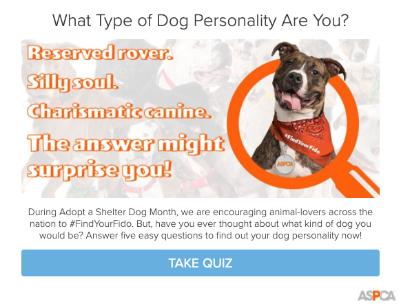 dog personality quiz cover