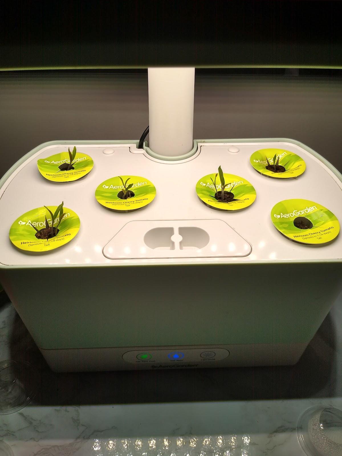 aerogarden tomato plant seedlings