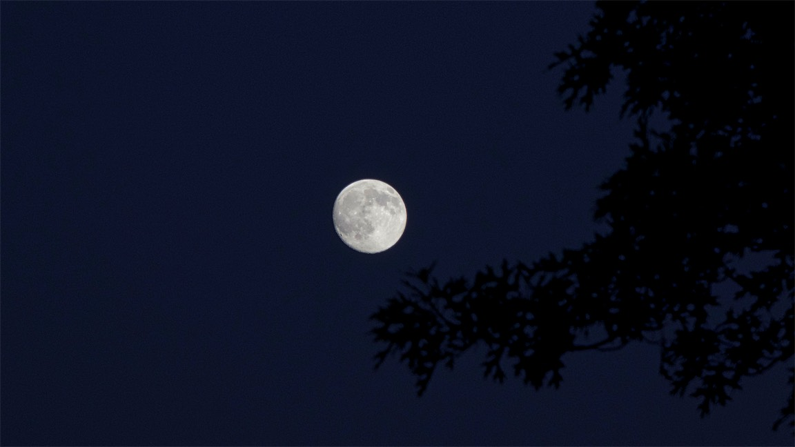 Moon w Tree.jpg