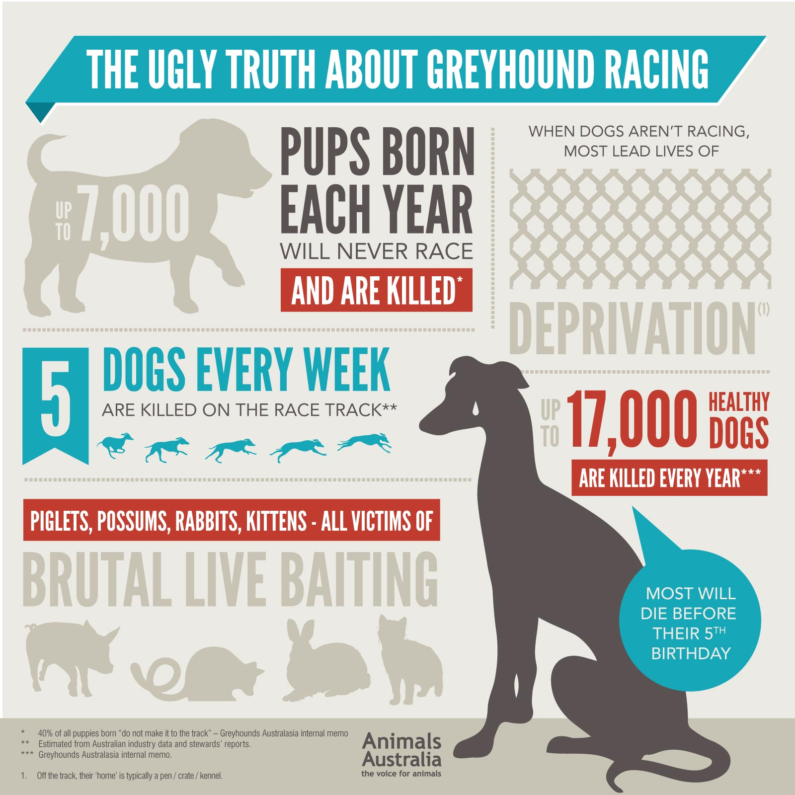 greyhound infographic.jpg