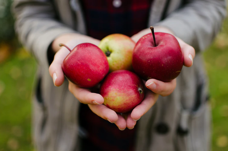 5 Successful Strategies To Grow Your Amazing Apples