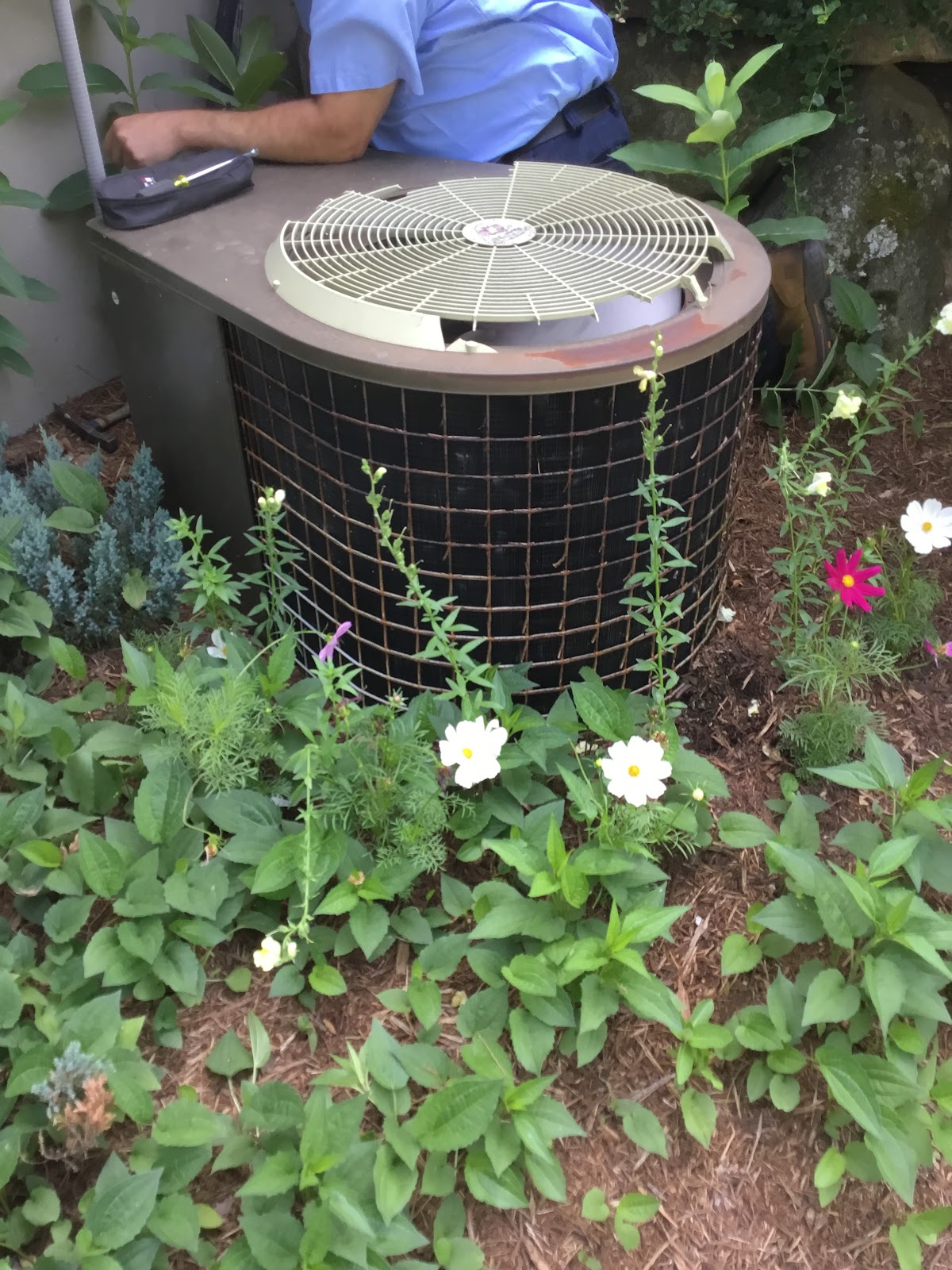 air conditioning unit surrounded by plants