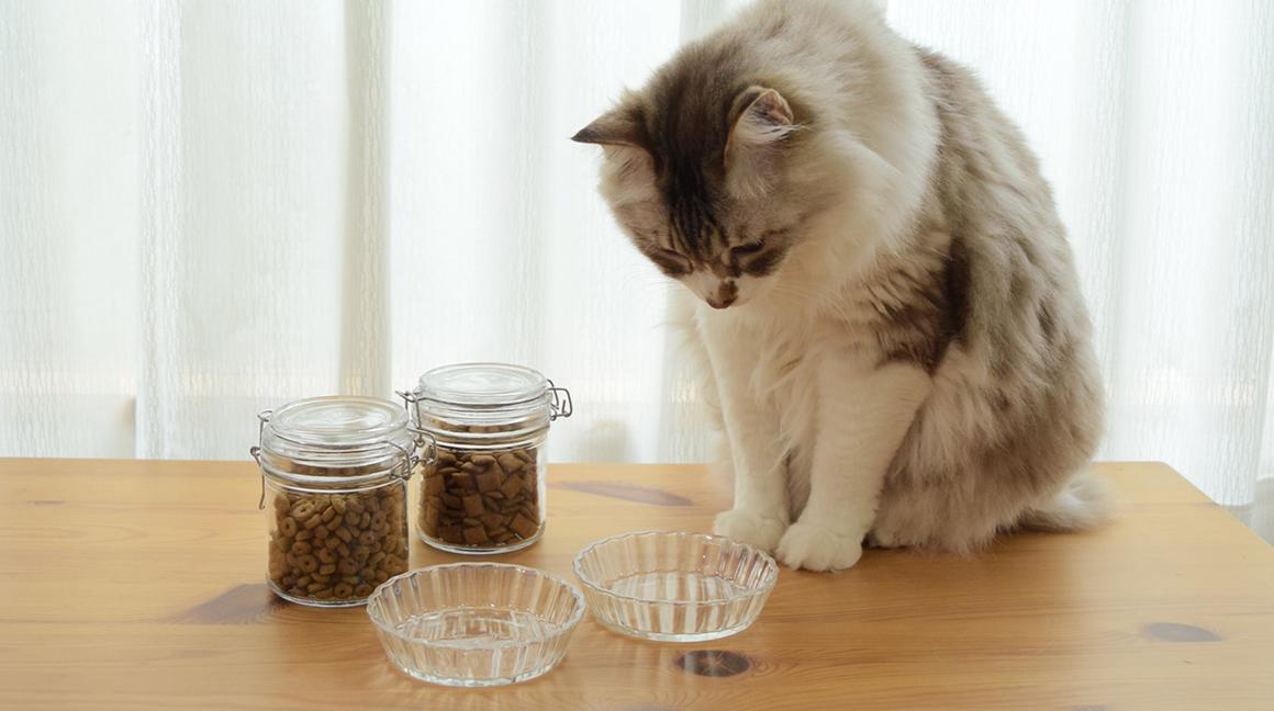 養貓須知 養狗須知 吃什麼飼料好 生食罐頭