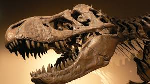 Image result for dinosaurs fossils
