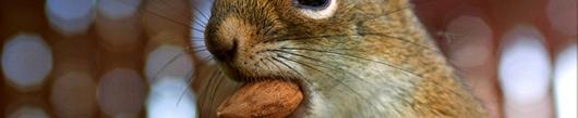 4 najbolj zdravi oreščki za hrustanje
