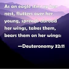 Image result for Deuteronomy 32: 11