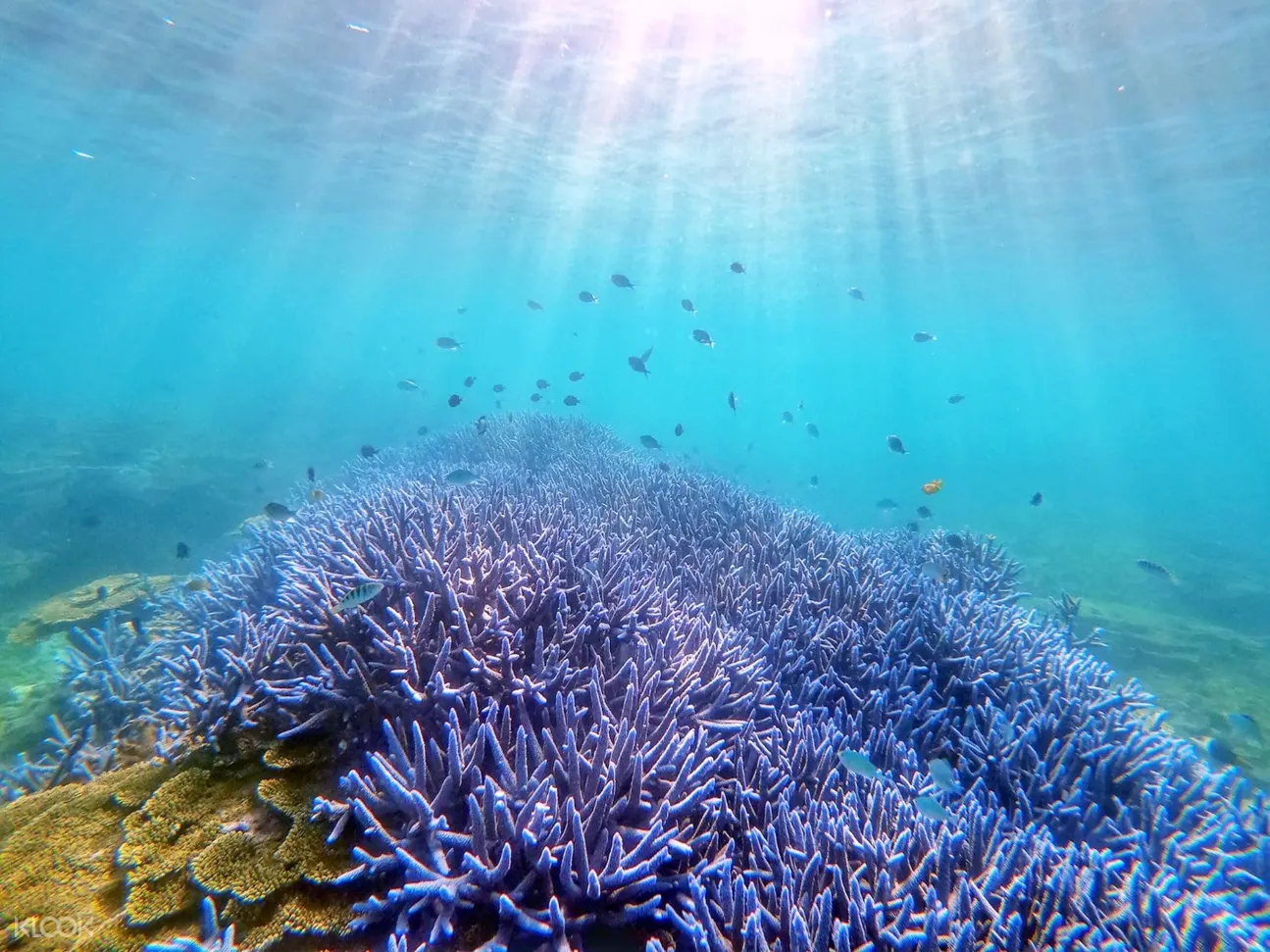 澎湖珊瑚礁天堂:忘憂島水上活動一日遊