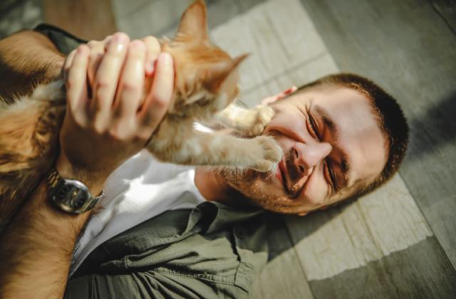 nên nuôi mèo đực hay cái là băn khoăn của nhiều người trước khi nuôi mèo