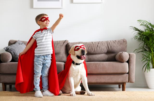 có nhiều tiêu chí để đánh giá giống chó thông minh dễ nuôi