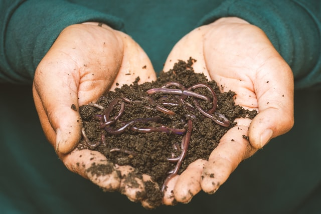 dogs and cats get worms through contaminated soil