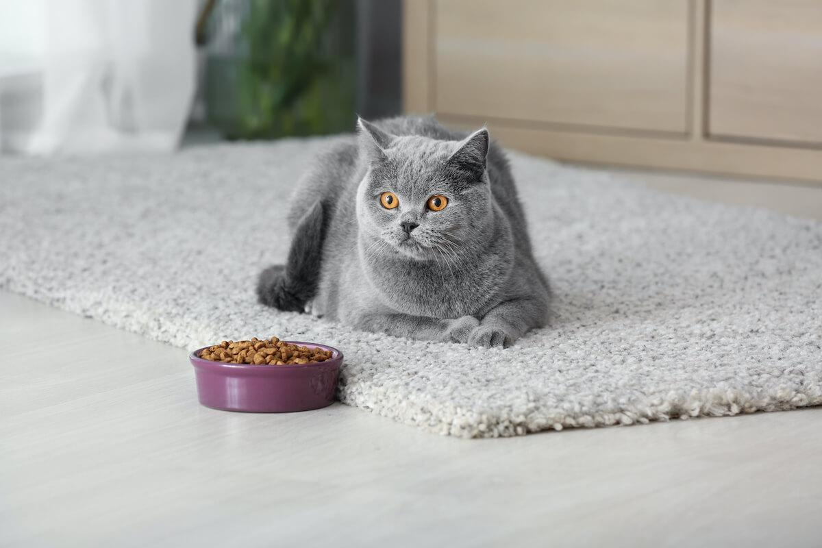 pour un chat heureux, il faut répondre à tous ses besoins naturels