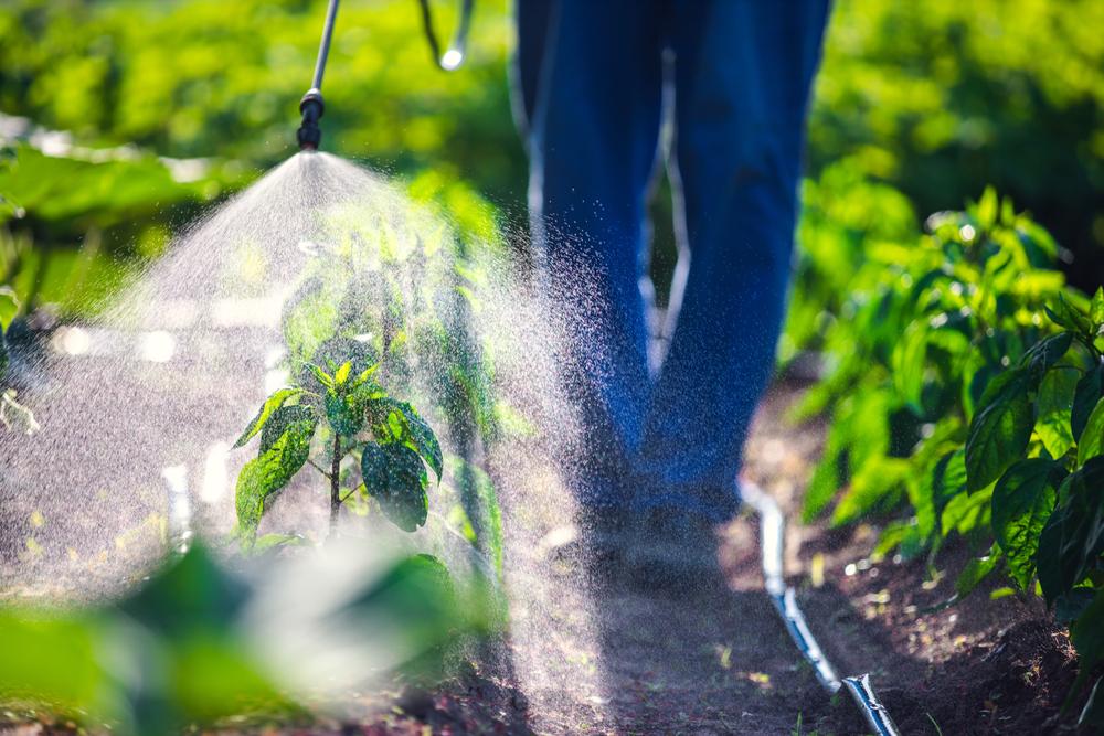 Produtos químicos são importantes para o controle de pragas, que podem comprometer a produção e o abastecimento da população. (Fonte: Valentin Valkov/Shutterstock)