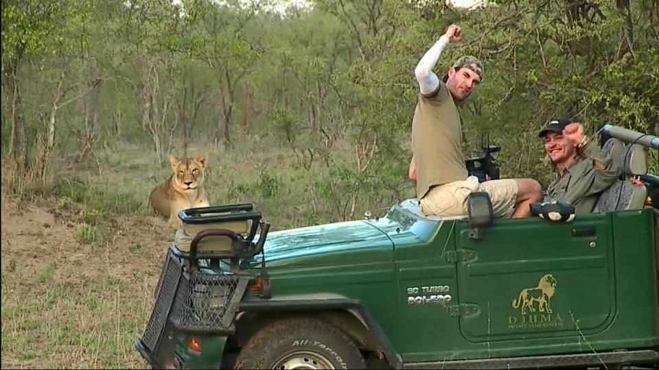 Nkuhuma lioness, Brent, Andrew Djuma 30 Jan 2016.jpg