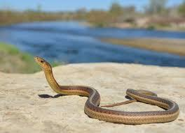 Змії: як уберегтися | Департамент охорони здоров'я