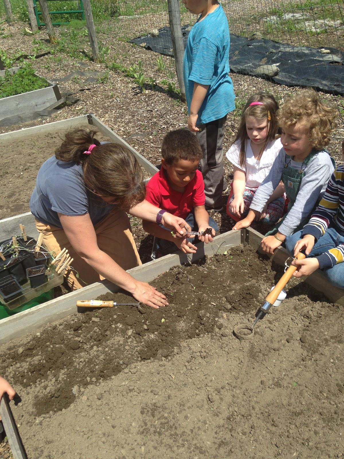 Planting C.jpeg