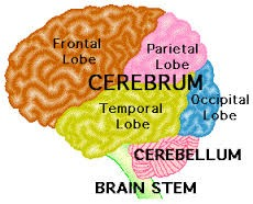 Brain Diagram.jpg