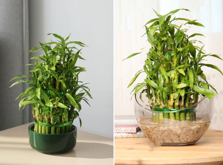 Palma bambú en el dormitorio