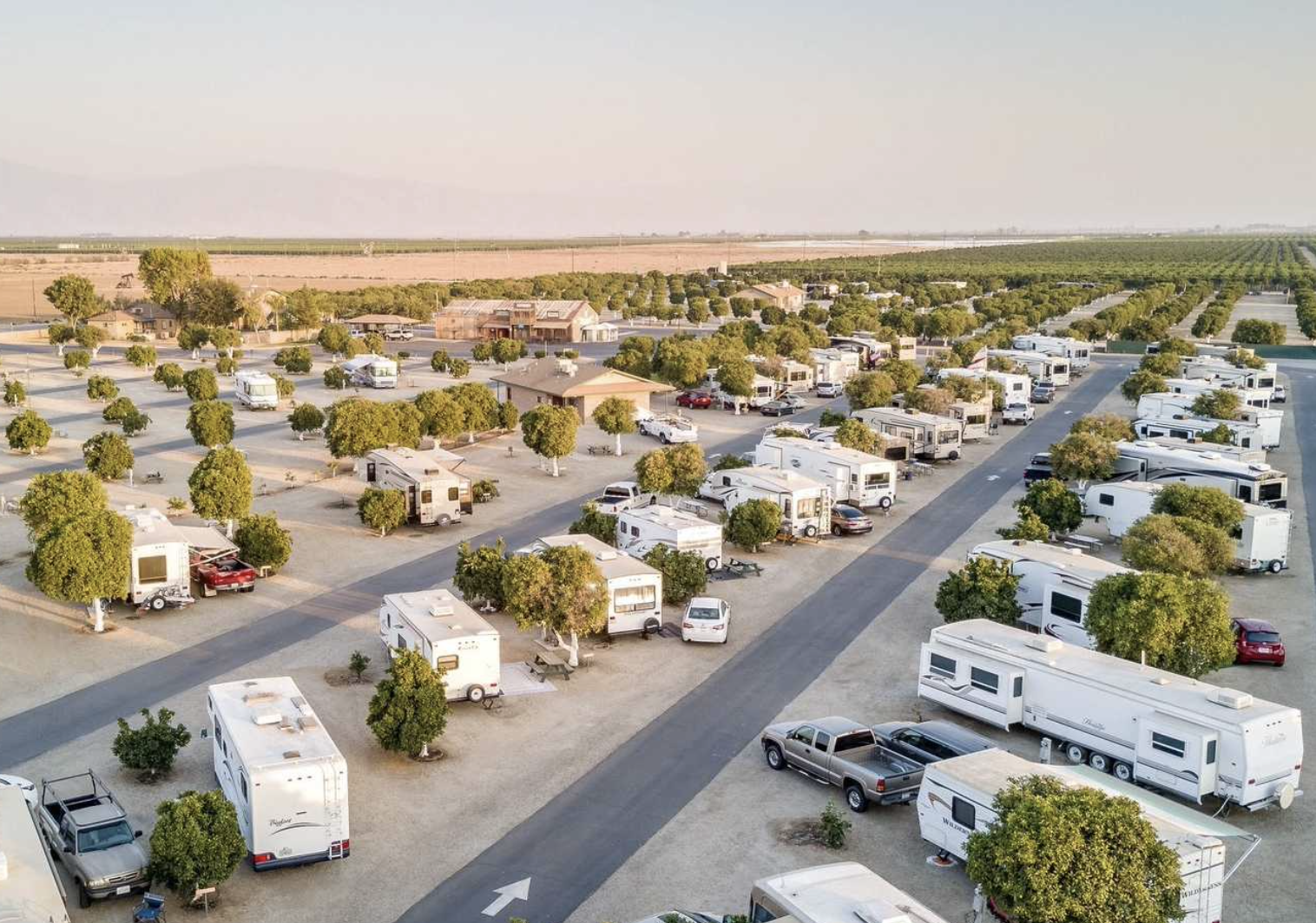 RVs parked between rows of orange trees in California