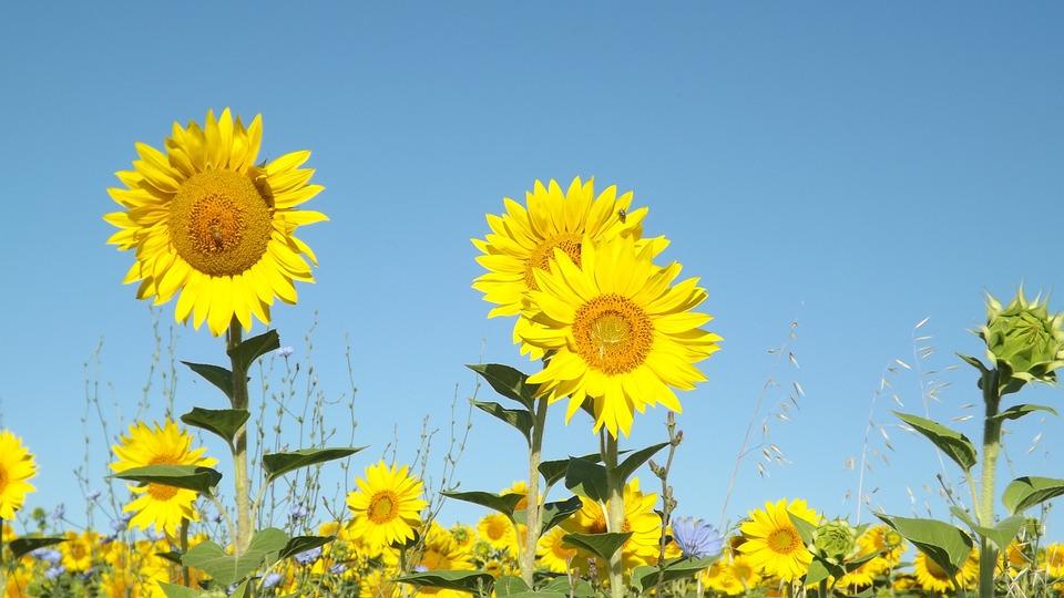 summer-1023065_960_720.jpg