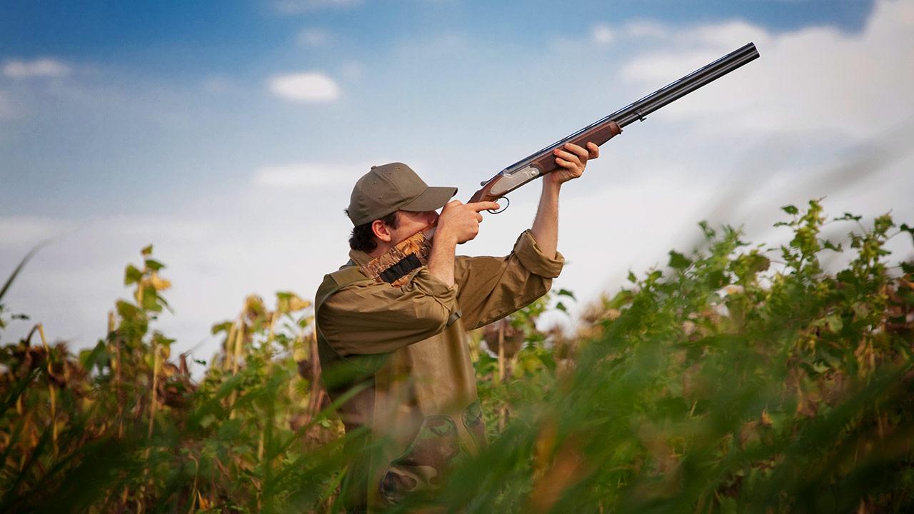 shooting for gamebirds