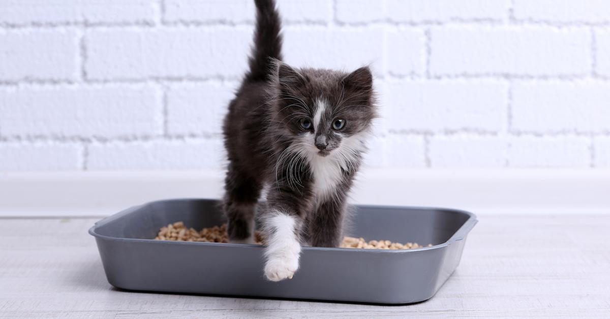 cute kitten in litter box