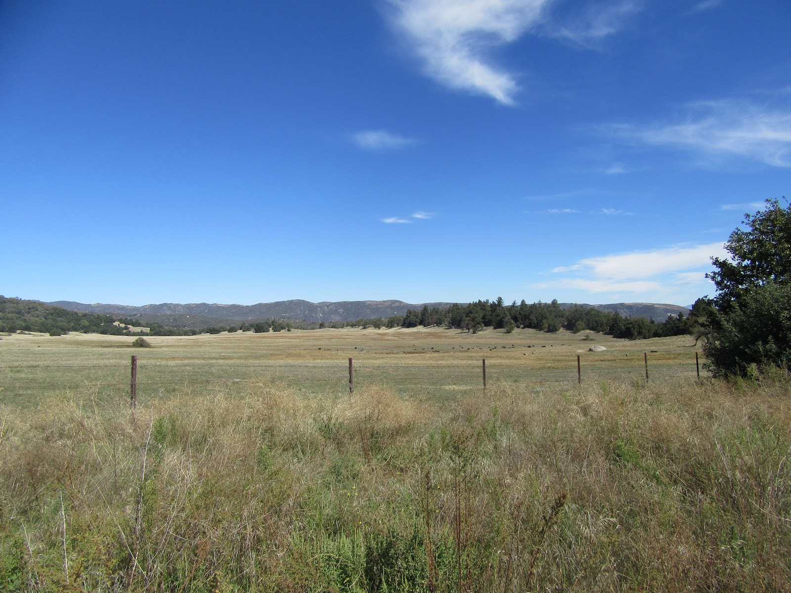 Climbing Palomar Mountain east by bike - views of open fields and cattle.