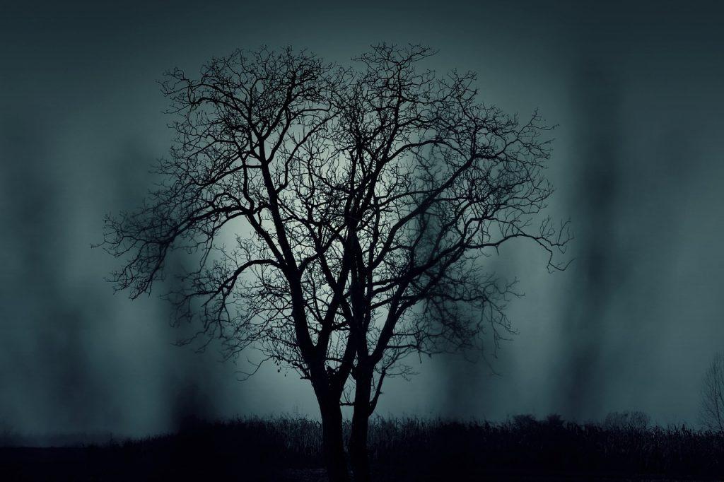 Tree against gloomy sky