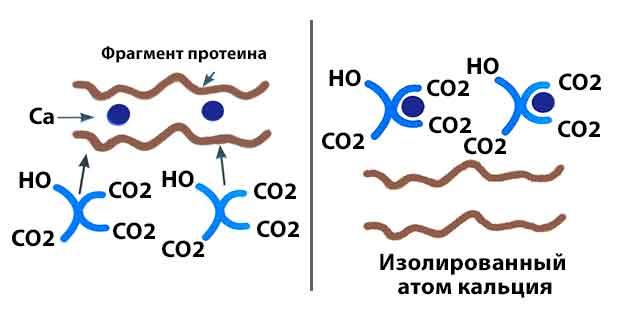 Механизм действия цитратов в растворе Hidro Helth Citrat