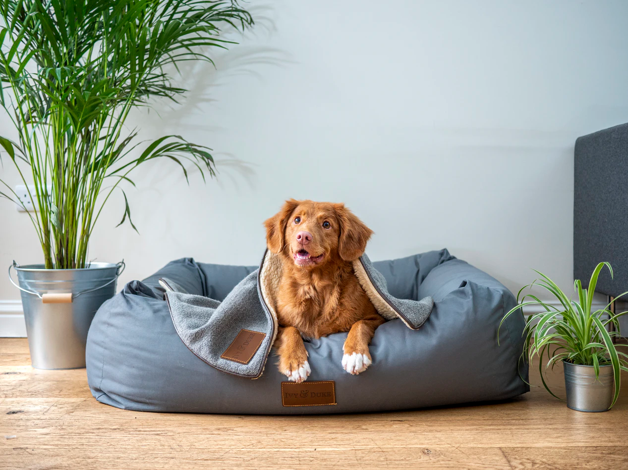 Know the Difference between Pets Allowed and Pet-Friendly