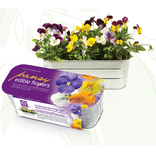 edible-flower-kit-pansy-1.jpg