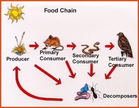 Food Chain In A Desert Ecosystems And Biomes 4c