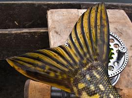 """""""Изгубени в камъша"""" - Мухарски риболов на щука на езерото Йоца в Сърбия - 1-ва част"""
