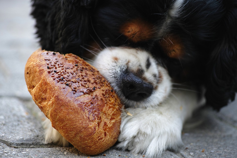 Cute pup eating bread