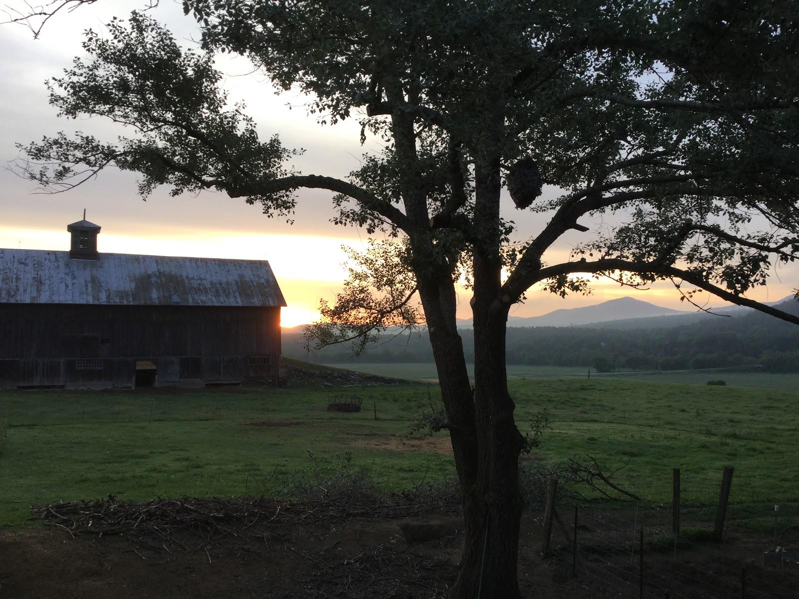 Farm Image 1