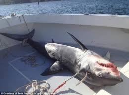 Image result for fishing shark boat
