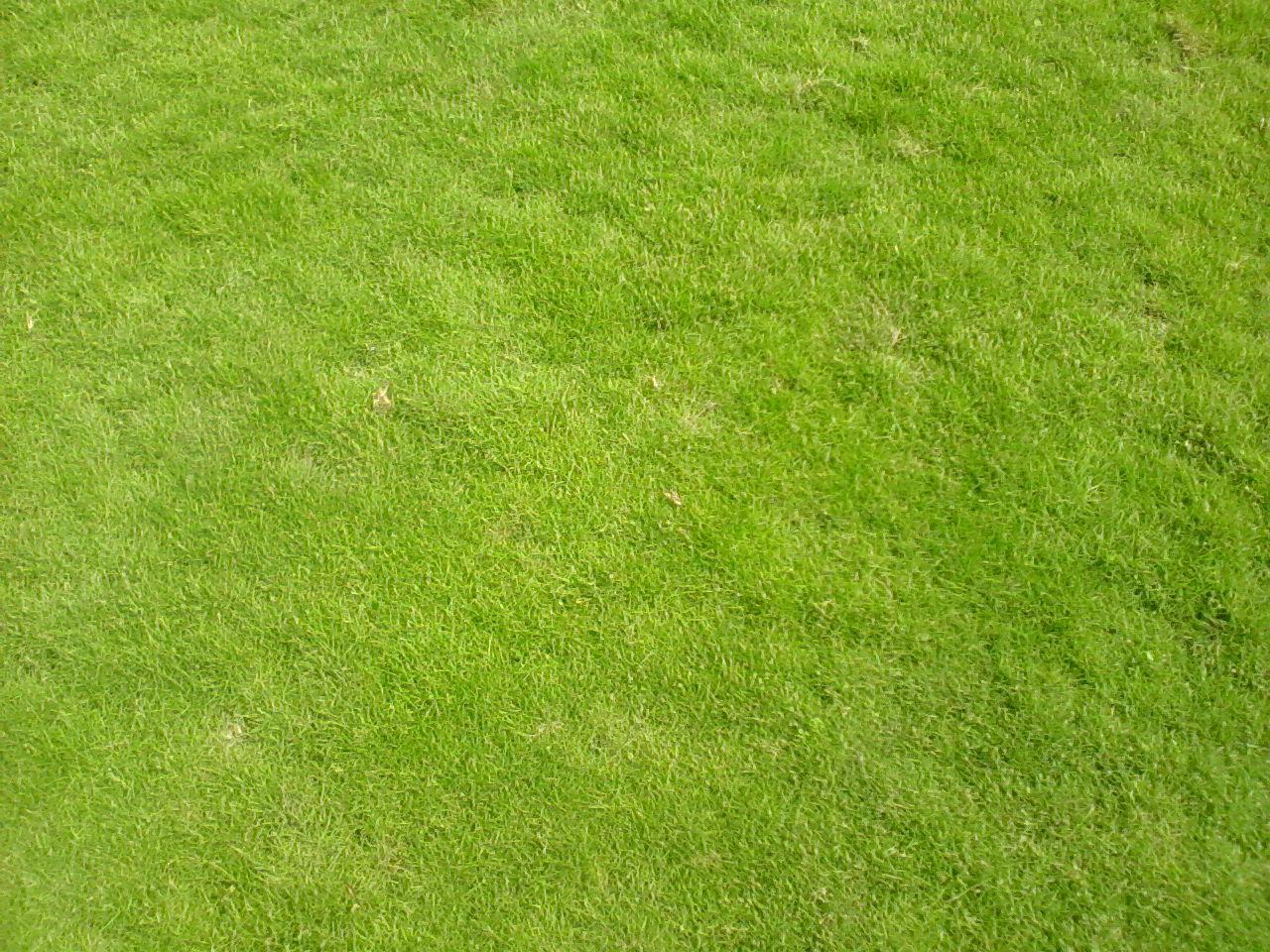 Ảnh có chứa cỏ, ngoài trời, cánh đồng, xanh lục  Mô tả được tạo tự động