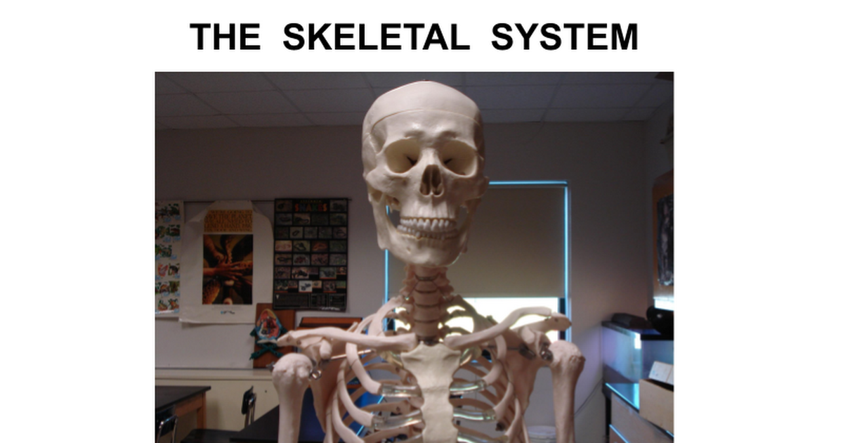 All About Learn The Skeletal System A Fun Amp Interactive Game