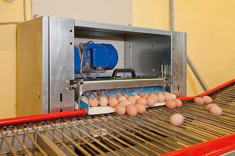 Kiaušinių transportavimas