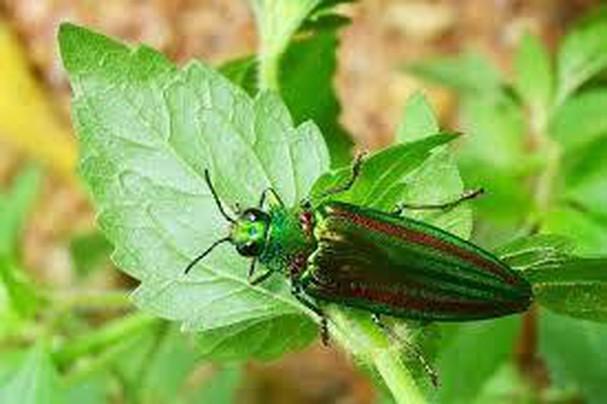 Diễn đàn rao vặt tổng hợp: Những loài côn trùng có ích bà con nông dân nên biết YEAXw-5UVo-V0Oy6Ne7Va3MEzkpFeSd0JyhjIIyMsW8N1mE3E0aRI2OpneyEmgWWOKX6puMnlpoVfnTNfFjcFar5O6gg5hafdHsnpHAYnffmCljqeYeOGW922_8aN9cqVjbHGmxK