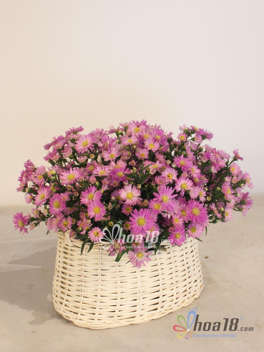 giỏ hoa 8 3 đẹp