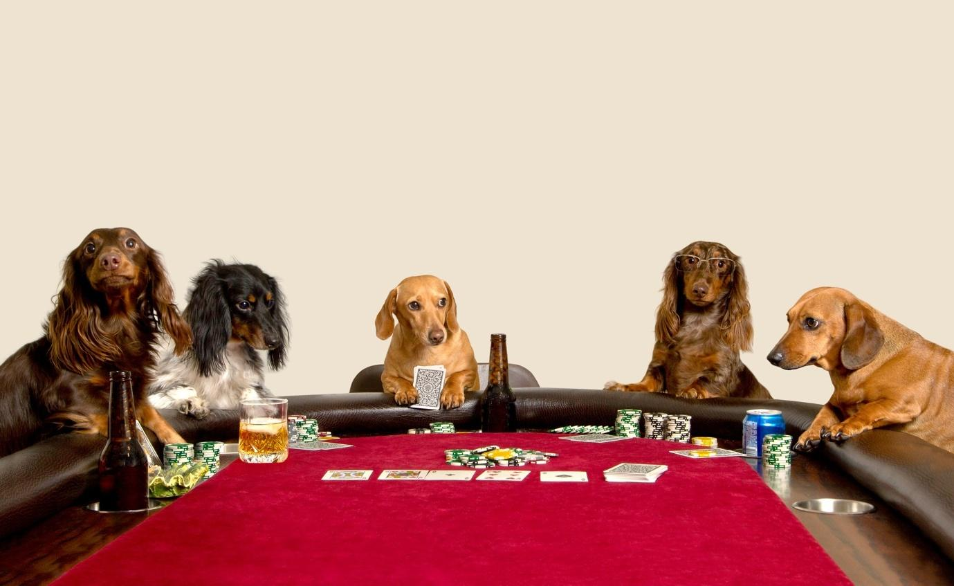 A group of dogs sitting at a table with a plate of food  Description automatically generated with low confidence
