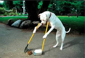 dog_clean_up2.jpg