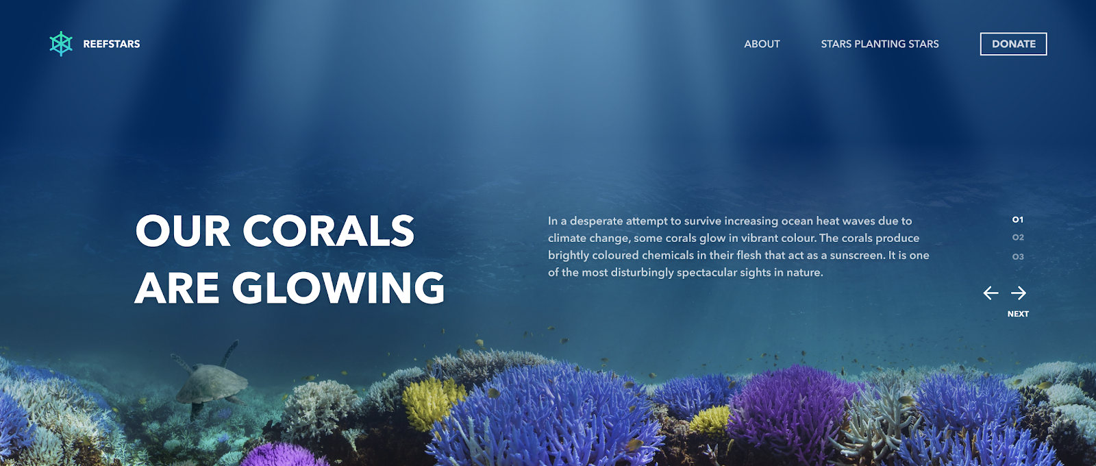 Homepage for the Reefstar project by the Pratt Institute for Adobe Creative Jams.