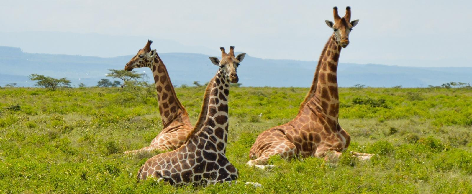 9 Things you Need to Know About Visiting Kenya